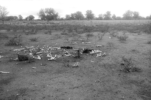 Bones of a dead animal in baron area in southern Africa